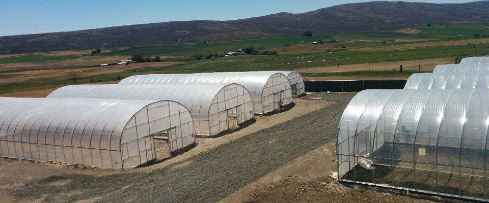 Series 500 Greenhouse