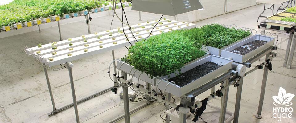 Microgreen Systems